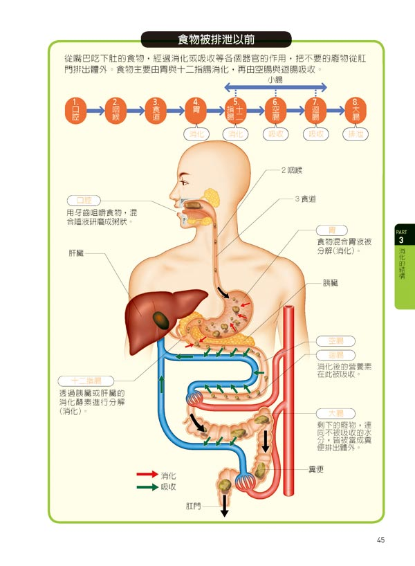 人体生理构造固�_买《图解人体生理学》送《心灵鸡汤(悲伤话题)》 《老婆爱说谎》